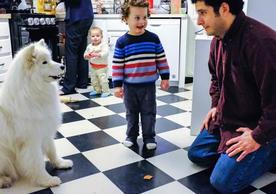 A family plays with their dog, a white fluffy Samoyed. Dan Greco and his two little sons play on the kitchen floor with the dog.