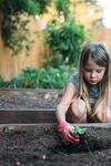 Little girl picks up a small plant from the dirt. She seems to be gardening.