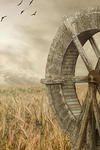 A wheat field and an old wooden grain mill wheel
