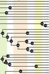 chart depicting a segment of fish evolution